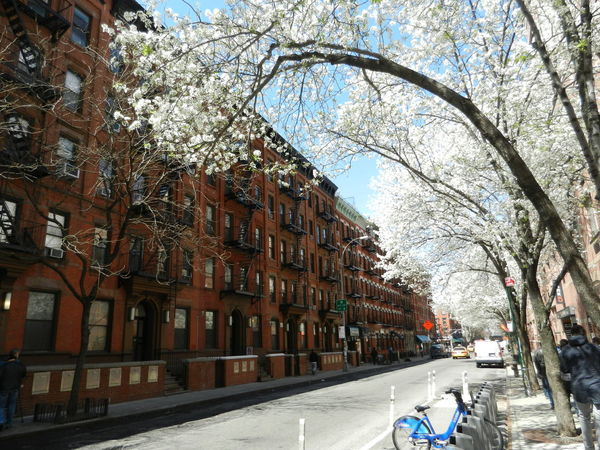 NYC Photography NYC Trees Streetphotography Hells Kitchen  Springtime Urban Spring Fever
