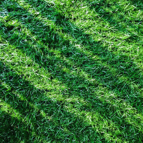 Green Grasses with shadow.Texture of grass field with lateral shadow, for your backgrounds.artificial turf Backgrounds Beauty In Nature Day Field Full Frame Grass Green Green Color Growth High Angle View Lawn Nature No People Outdoors Plant