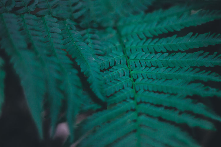 Travel Traveling Bali Bali, Indonesia Thailand Summer Nature Outdoors Green Color Full Frame Selective Focus Close-up Pattern Backgrounds No People Plant Part Leaf Fern Textured  Growth Plant Natural Pattern Day Beauty In Nature Detail Textile Leaves