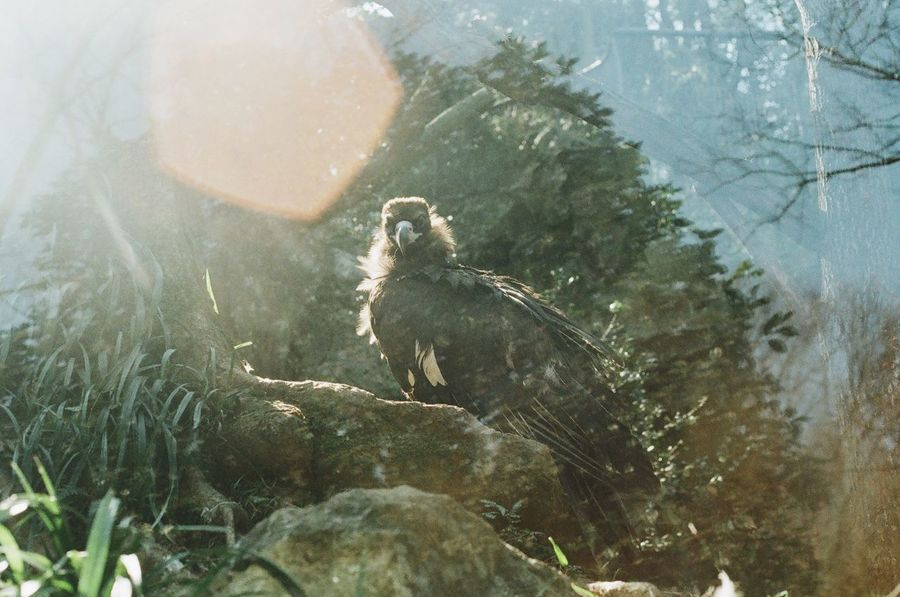 Zoo Bird Eagle Eagle - Bird One Animal Animal Themes Outdoors On The Tree Looking At Camera Film Film Photography Through The Glass Beauty In Nature Nature