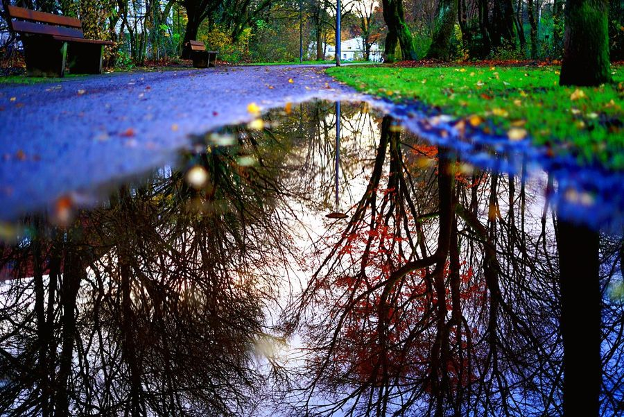 Tree Nature Reflection Outdoors Water No People Growth Tranquility Beauty In Nature Day Forest Bare Tree Multi Colored Branch City
