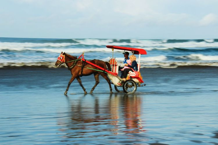 People riding in horse cart at beach