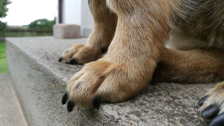 Furry Friends Majestatic Beauty Of Simple Photo Claws Dog Lovefordogs❤️ Paws Very Close