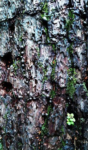 Moss EyeEm Nature Lover Macro Nature Beautiful Bark