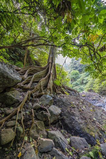 Tree Forest Full Frame