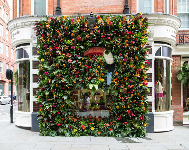 Nice flower decoration during the Chelsea Flower Show Architecture Architecture Bloom Chelsea City Colorful Cor Decoration Flower Green Historical No People Outdoors Plant Shadow Shopping Shopping ♡
