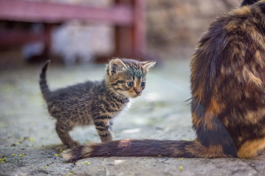 Animal Animal Themes Animal Wildlife Animals In The Wild Cat Day Domestic Domestic Animals Domestic Cat Feline Focus On Foreground Group Of Animals Kitten Mammal No People Pets Two Animals Vertebrate Whisker Young Animal