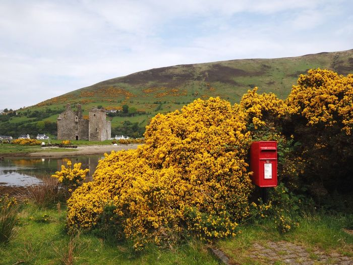 Post Box  Red Box Postal Post Royal Mail Postbox Scotland Scottish Isles Scottish Sea Arran  Isle Of Arran  Plant Nature Growth Sky Beauty In Nature Mountain Cloud - Sky