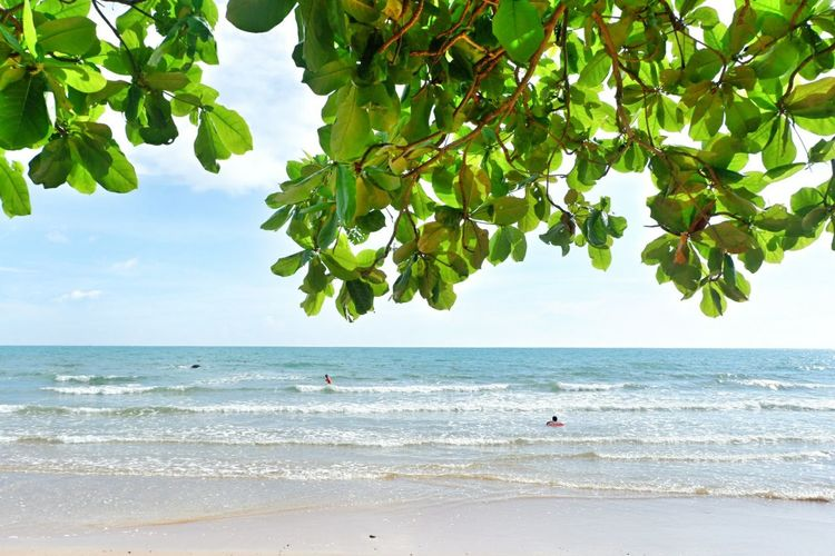 Sea Beach Sea Tree Water Beauty In Nature Nature Summer Scenics Landscape Tranquil Scene Horizon Over Water Tranquility Travel Destinations Idyllic Tropical Climate Vacations Sunny Sky Outdoors Sand Kung Wiman Beach Chanthaburi Thailand