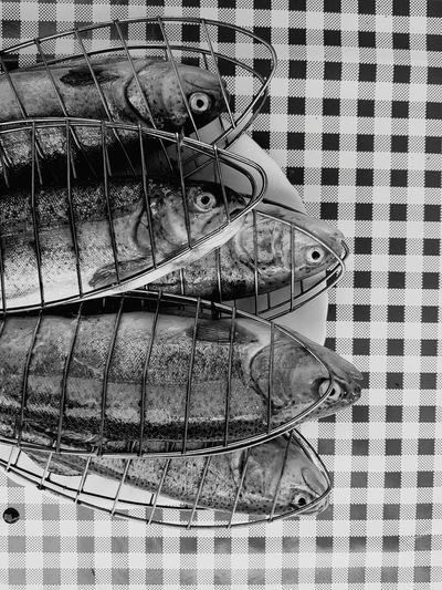dead fish Fish