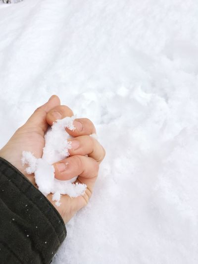 EyeEm Selects Human Hand Hand Human Body Part One Person Body Part Holding White Color Indoors  Human Finger Adult Cold Temperature Winter Unrecognizable Person Real People Finger Men Human Limb Snow Lifestyles