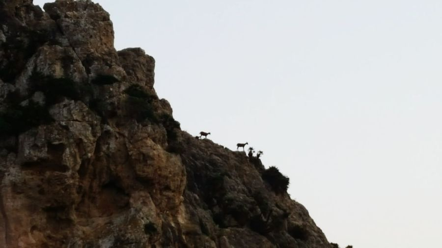Goats Landscape Nature Rock - Object Outdoors Vacations No People Beauty In Nature Eco Tourism Day Goat Moutain Mallorca