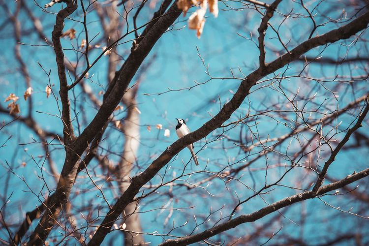 Bird Photography Nature Nature Photography Animal Animal Themes Animal Wildlife Animals In The Wild Bare Tree Bird Birds Blue Sky Branch Low Angle View Nature Nature_collection One Animal Outdoors Perching Plant Sky Spring Springtime Tree Vertebrate Wallpaper