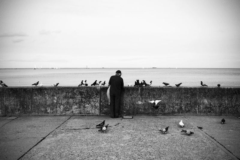 Rear view of man standing amidst pigeons on retaining wall by sea