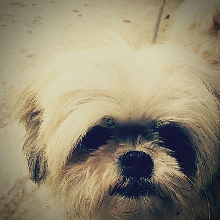 Pet Portraits Animal Hair Portrait ... Close-up Domestic Animals ❣ Looking At Camera