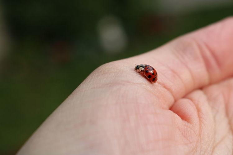 Cropped hand holding ladybug