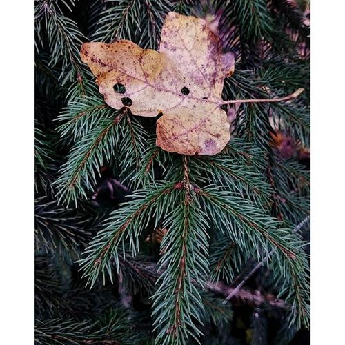 Nature Autumn Forest Leaves peace walk peaceful