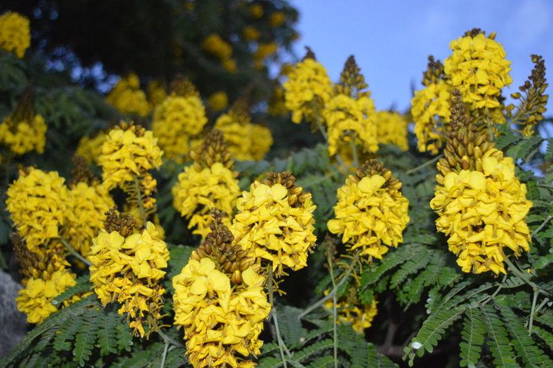 Paint The Town Yellow Amarelo Azul é A Cor Mais Quente  Flor Amarela Paisagem Amrela Paisagensdolitoral Verde E Amarelo