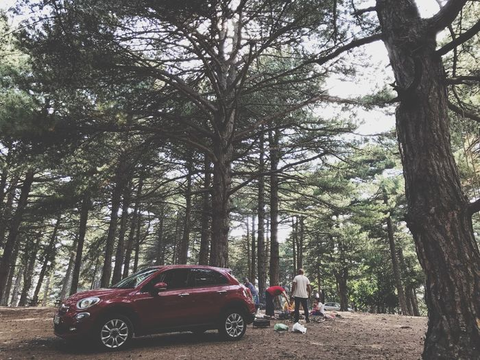 Transportation Tire Old-fashioned Tree Car Transportation Tree Trunk Growth Day Real People Land Vehicle Forest Full Length Nature Branch Outdoors Cars Fiat500 Red Color
