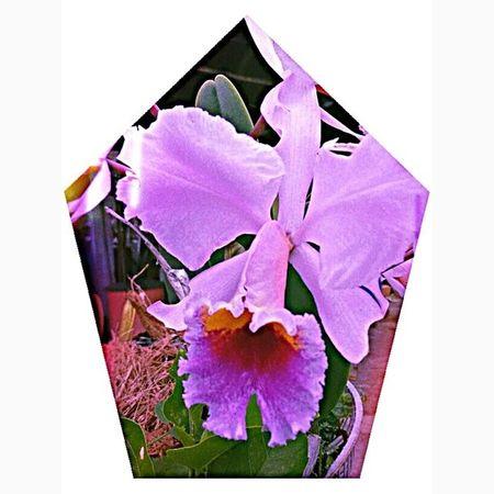 En el jardín de mi abuela florece esta maravilla de la naturaleza Orquídea❤ . Flowers Nature Beautiful pretty plants blossom spring summer flowerstagram flowerslovers botanical jw floral