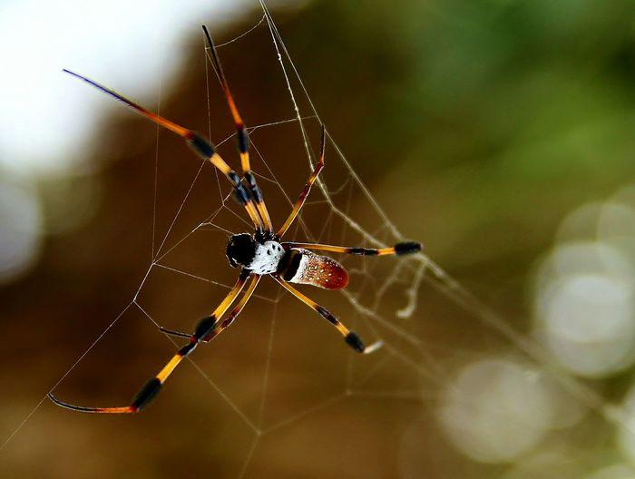 Spiders Spider