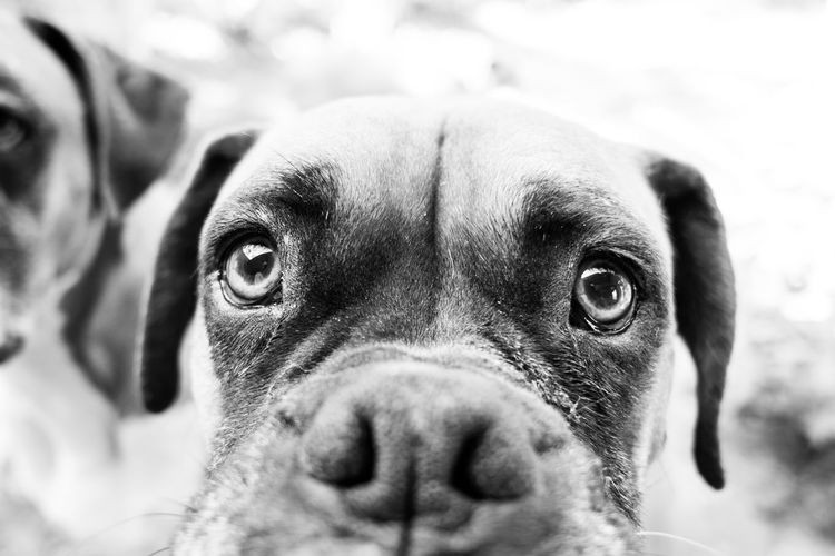 Animal Themes Close-up Day Dog Domestic Animals Indoors  Looking At Camera Mammal No People One Animal Pets Portrait