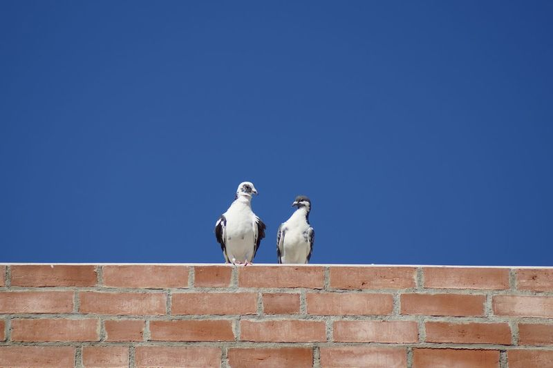 Low angle view of pigrissima perching on wall