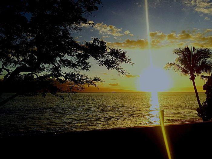 Got Hawaii