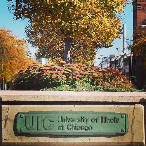 Chicago Uic Urban Landscape Urban Nature