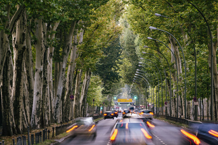 Berlin, Germany, October 09, 2018: Famous Puschkinallee Through Treptow Park Berlin Germany 🇩🇪 Deutschland Color Image Horizontal No People Outdoors Tree Plant Day Nature Road Transportation Plane Tree Sycamore Tree Puschkinallee Treptower Park Treptow Park History Soviet War Memorial Trunk Tree Mode Of Transportation Car Motion Blur Traffic