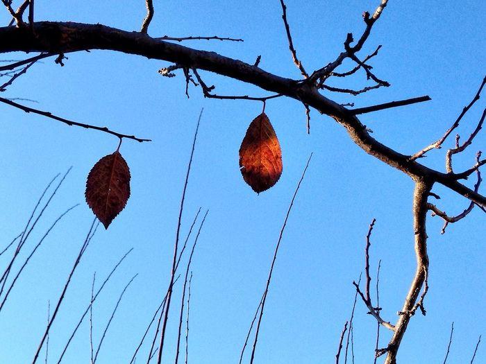 Dialogue Sofiavicchi Sofiavicchiconceptdesign Autumn Autumn Leaves Orange