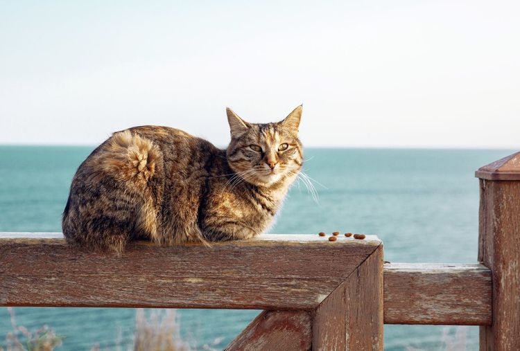 Cat looking at sea against clear sky