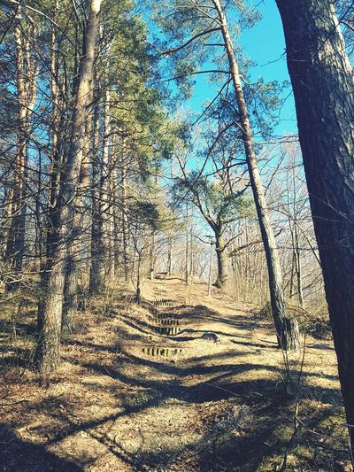 forest stairs Trees Trees And Sky Clear Sky Pine Day Springtime Tree Sunlight Shadow Sky Growing Woods Tree Trunk Sunrays Pathway Bark Branch Plant Bark Growth