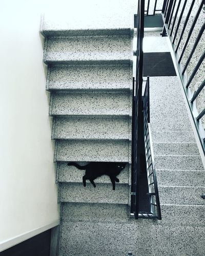 Structure, repeating patterns and cat Built Structure Domestic Animals Mammal Pets Railing Outdoors Domestic High Angle View Pattern Wall - Building Feature One Animal Vertebrate Steps And Staircases