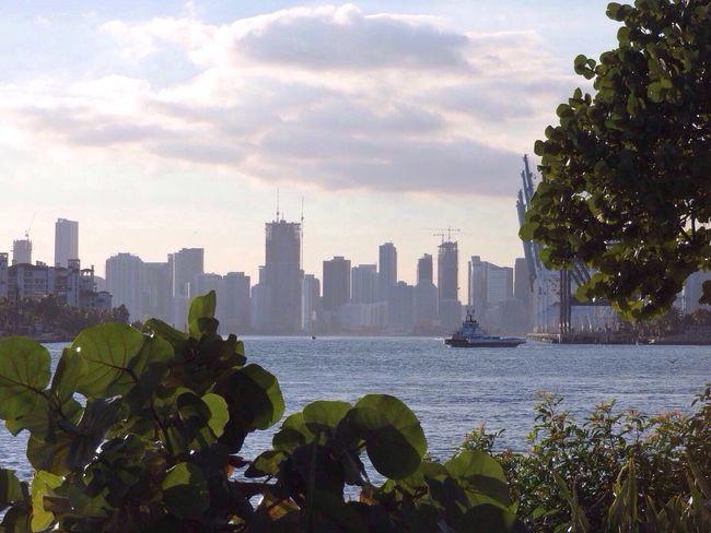 USA Aupair Water Green Leaves Grüne Blätter Schiff Chip Skyskrapers Hochhäuser Wolken Clouds Place Of Heart