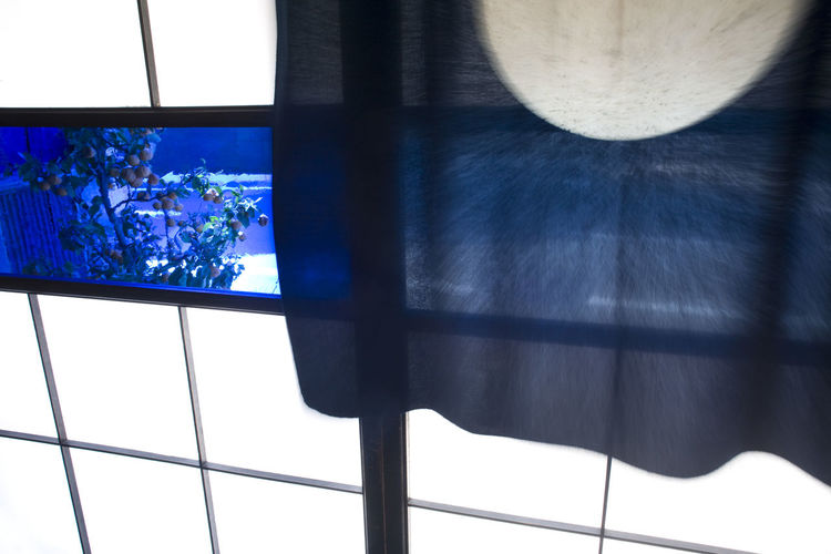 Tokyo Blue Window in Shoji Door with Blue Noren Noren Close-up Day Indigo Indigo Blue No People Shoji Window