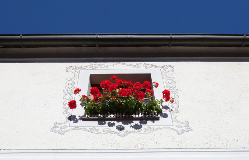 Architecture Bavaria Blooming Blossom Blue Blue Sky Built Structure Clear Sky Crane´s Bill Cullis Flower Geranie Geranium Plant Potted Plant Rain Pipe Wall Wall - Building Feature Window Fine Art Photography Colour Of Life