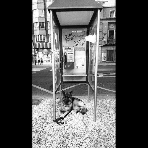 Guardián Telephone Pay Phone Eyeemphotography Blancoynegro Fotobnw Fotobnw_life Allbnw_shots Fotobnw_life EyeEm Best Shots - Black + White Caminar, Avanzar, Aprender...  Blackandwhite Photography Black And White Collection  Black And White Collection  Luz E Sombra Zaragoza City Outdoors Negro Y Blanco Cityphotography Scenics Roadtrip Photography Roadtrippin Sempre Somosfelices Travel Destinations