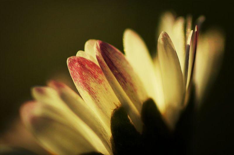 Macro_collection Macro_perfection EyeEmBestPics Macro_flower