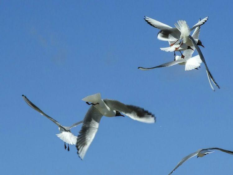 Seagulls And Sea Seagulls Seagulls Flying Over Me Birds Of EyeEm  Birds In Flight Birds EyeEm Birds