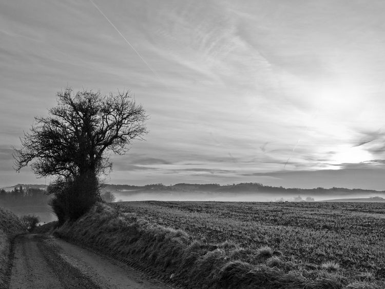 Austria Black & White Lone Tree Morning Road Beauty In Nature Black And White Blackandwhite Cold Day Field Foggy Landscape Meadow Mist Mood Nature No People Outdoors Rural Scene Scenics Sky Tranquil Scene Tranquility Tree