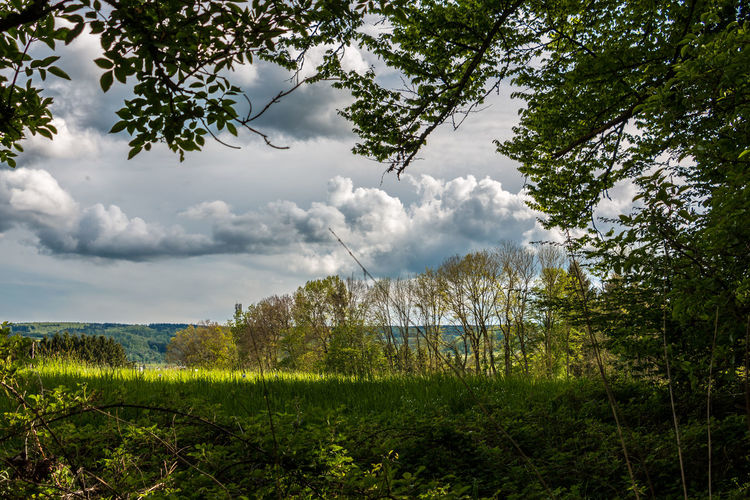 Landscape view out of the forest with green fields Beauty In Nature Branch Cloud - Sky Day Field Grass Green Color Growth Landscape Nature No People Outdoors Plant Scenics Sky Tranquil Scene Tranquility Tree