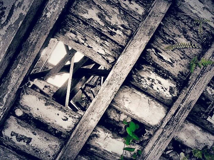 Wooden material Old Buildings Wooden Wood - Material Abandoned Abandoned House Old House My Capture  Woods Hole Woods Leaves Parasite Broken Damaged Bad Condition Damaged Building Fine Art Photography