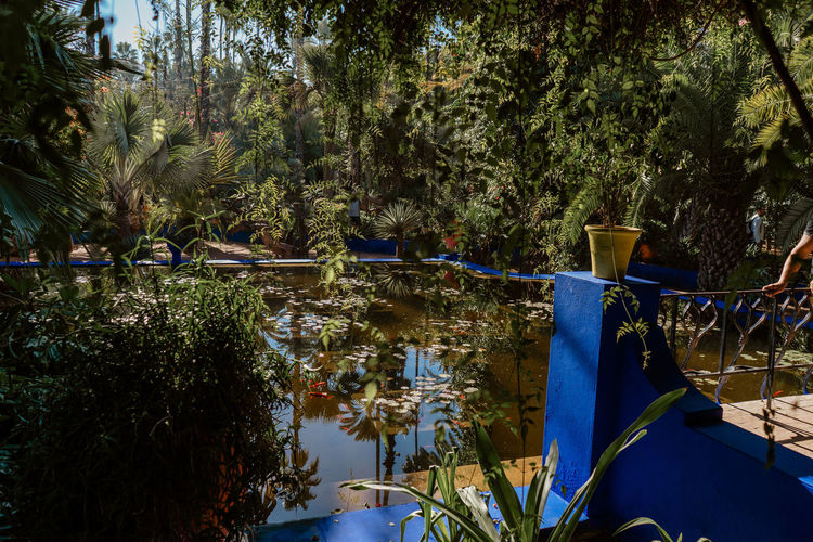 Morocco Marrakesh Marrakech Majorelle Garden Majorelle Water Plant Tranquil Scene Reflection Tranquility Scenics - Nature Sunlight Growth No People Lake Tree Day Beauty In Nature Outdoors Garden Tourist Attraction  Travel Destinations