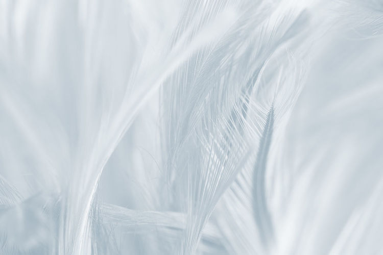Backgrounds White Color No People Close-up Textured  Full Frame Abstract Pattern Extreme Close-up Nature Textile Abstract Backgrounds Softness Selective Focus Copy Space Freshness Indoors  Macro Gray Plant Silver Colored Textured Effect
