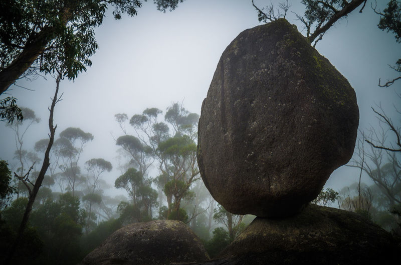 Balanced Rock Boulder Day Ecosystem  Foggy Morning Nature No People Outdoors Rock-object Silence Sky Symmetry Tranquil Scene Tree Wilderness