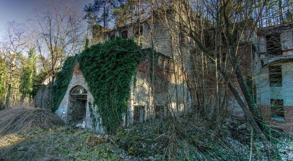 Baumkronenweg Beelitz Plant Tree No People Built Structure Architecture Growth Day