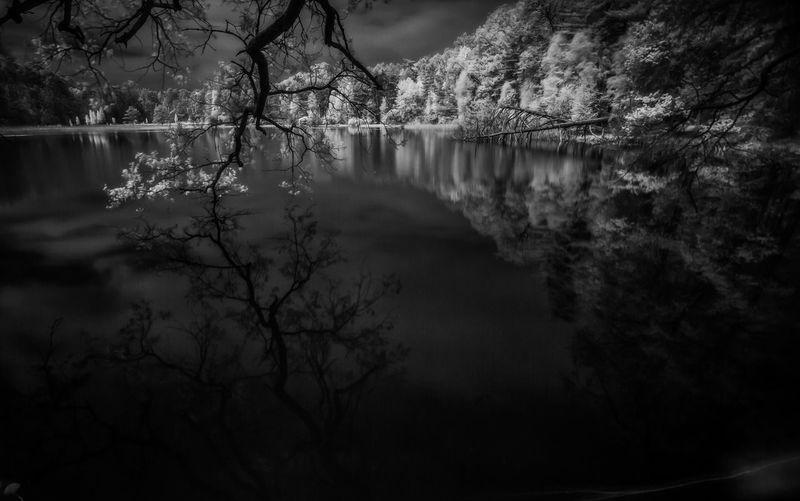 Wood, lake, mirror, tree, water, Reflexion, infrared