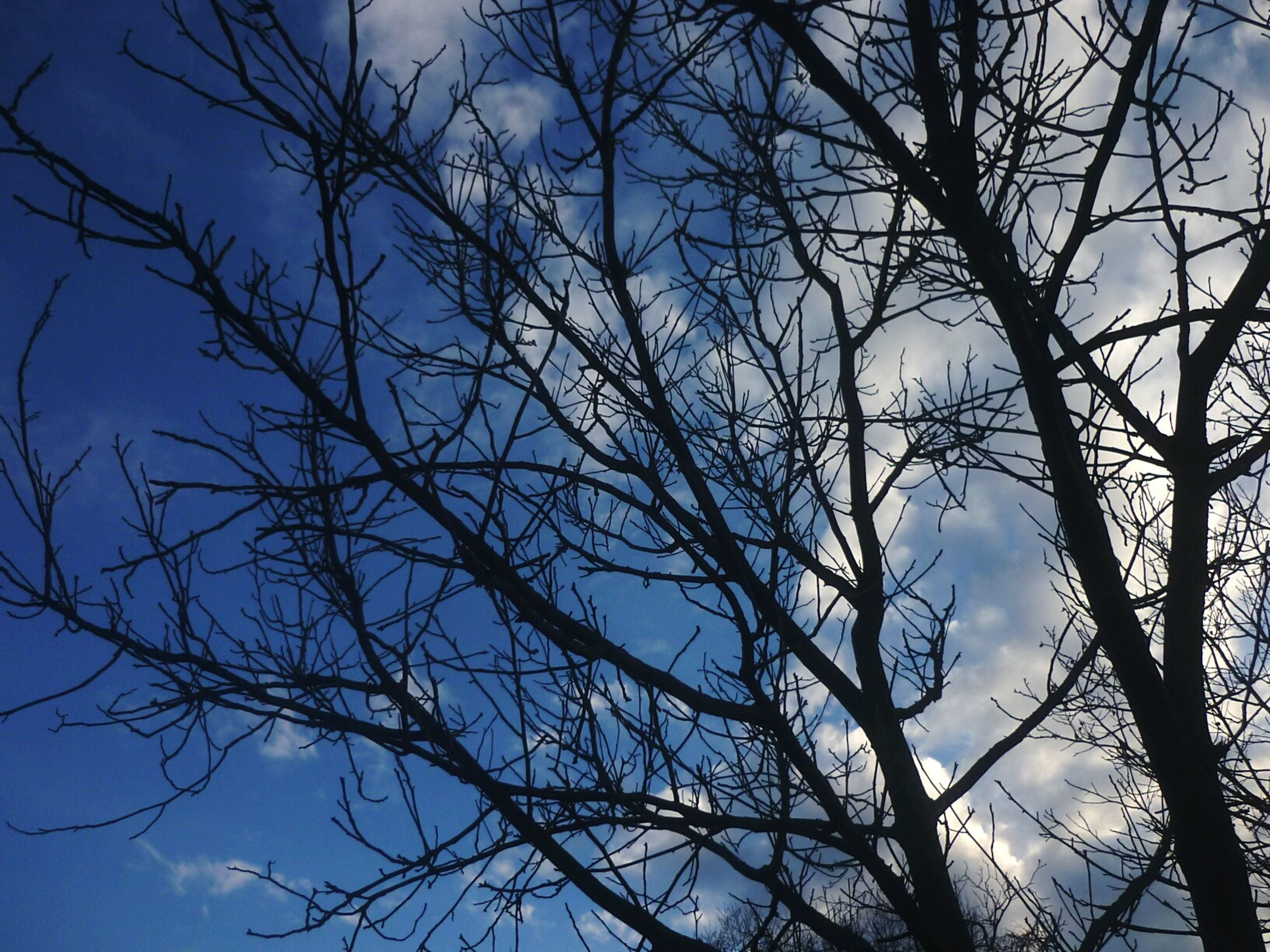 low angle view, bare tree, branch, tree, sky, tranquility, nature, silhouette, beauty in nature, blue, scenics, outdoors, day, no people, clear sky, growth, tranquil scene, cloud - sky, tree trunk, high section