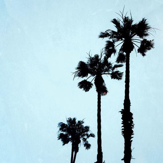 Piña colada. Palm Trees Holiday Bluesky Minimalism Whitespace Peaceful